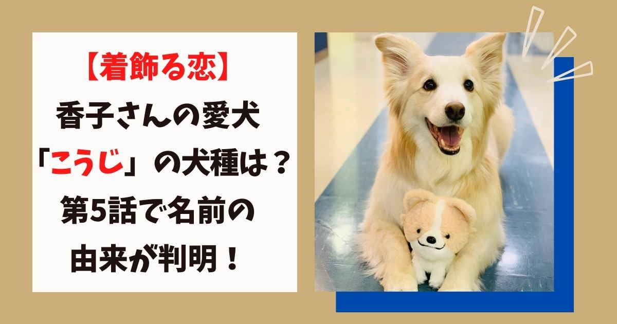 「着飾る恋」に出てくる犬「こうじ」の画像